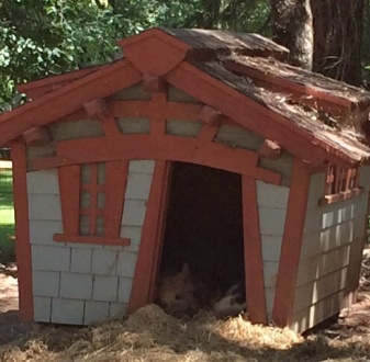 Afternoon nap in the Kunekune house